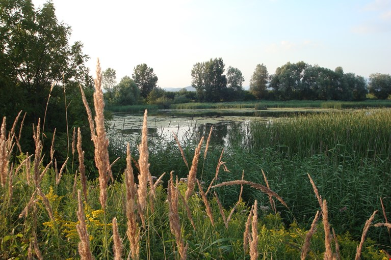 The Vrbje Pond